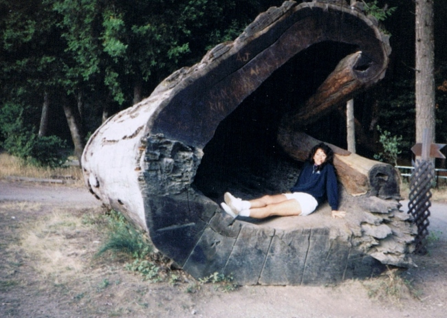 Redwood Forest in a redwood tree trunk, Vilma Reynoso