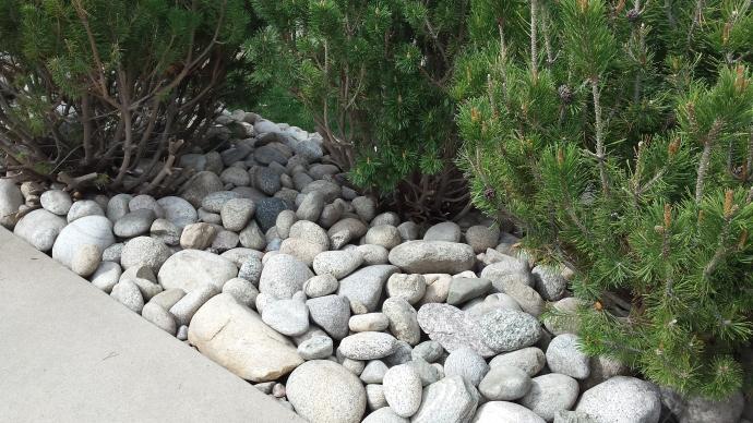 rocks near three bushes