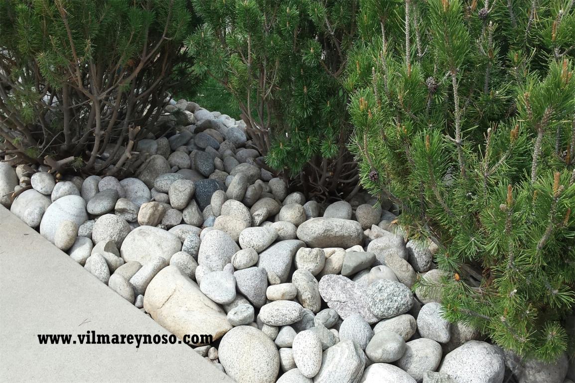 The Rocks, Vilma Reynoso