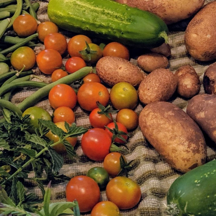 potatoes, tomatoes, cucumber, and basil pulled from the garden