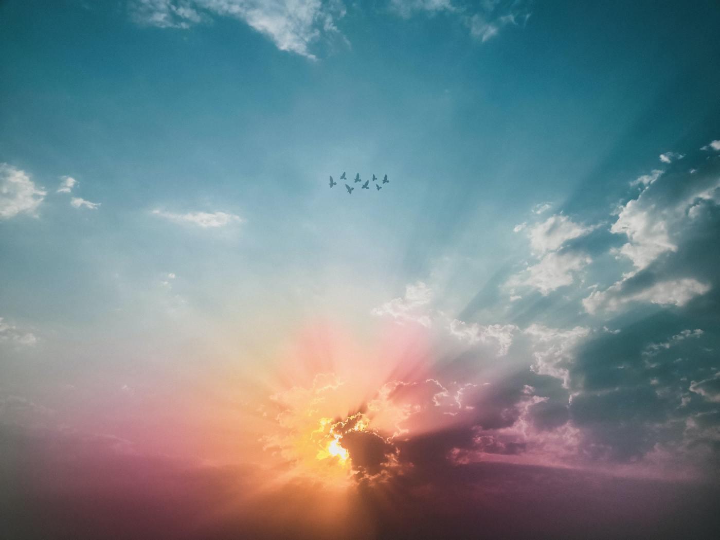 Birds flying high in an orange sunrise